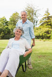 Silly man pushing his wife in a wheelbarrow Stock Images