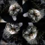 Silly Meaw. My cat just wake up Stock Photography
