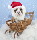 Silly Santa Bulldog Puppy Royalty Free Stock Images