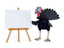 Silly toon turkey looking at blank sign. Stock Photography