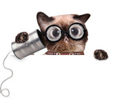 Silly ugly cat on the phone with a can. The white banner Stock Photos