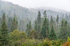 silna mgła obrazy stock