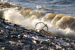 Silnego wiatru upadek Zdjęcia Royalty Free