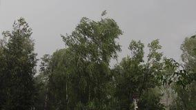Silni chluśnięcia wiatr i ulewny deszcz zginają gałąź drzewa podczas złej pogody Widok od Windows dom zdjęcie wideo