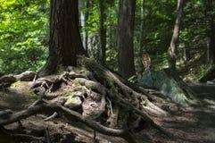 Silni korzenie w lesie Fotografia Royalty Free