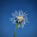 Silnik wiatrowy ziemi kwiat Obraz Stock