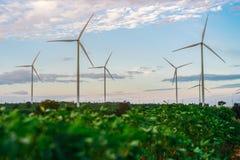 Silnika Wiatrowego gospodarstwo rolne, Wiatrowej energii pojęcie Fotografia Stock