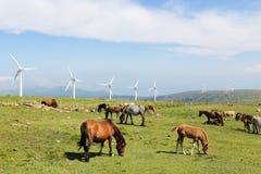 Silniki wiatrowi na wiatrowym gospodarstwie rolnym w Galicia, Hiszpania Obrazy Stock