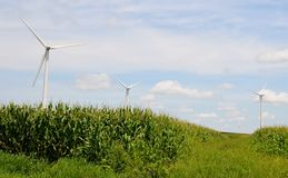 Silniki Wiatrowi w Kukurydzanym polu Obrazy Stock