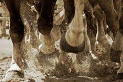 silnikowego sepiowy kopyto konia Zdjęcia Stock