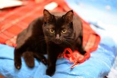Silny czarnego kota obsiadanie na kanapie zdjęcie stock