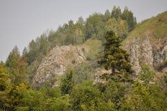 Silny jedlinowy drzewo przy górą Obrazy Stock
