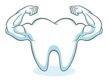 Silny zdrowy ząb ilustracja wektor