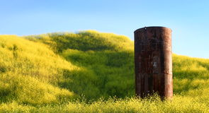 Silo. In the middle of yellow mustard Royalty Free Stock Images