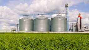 Silo agrícola, plantaciones del girasol del primero plano - exterior, almacenamiento y sequedad constructivos de granos, trigo, m almacen de metraje de vídeo