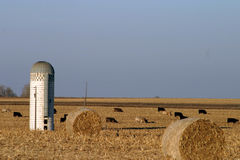 Silo cows hay bales on Midwest farm Stock Photos