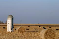Silo cows hay bales on Midwest farm Stock Photos
