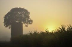 Silo da árvore de figo Imagem de Stock Royalty Free