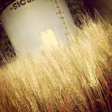 Silo de grano Imagen de archivo libre de regalías