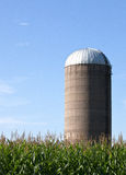 Silo em um campo de milho Foto de Stock
