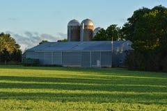 Silo Glow. Three silos in a sunrise golden glow Royalty Free Stock Photos
