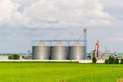 Silo, piantagioni del girasole della priorità alta - esterno di costruzione, stoccaggio e essiccazione agricoli dei grani, grano, Fotografia Stock