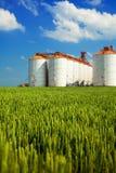 Silos agrícolas debajo del cielo azul, en los campos Imagen de archivo libre de regalías