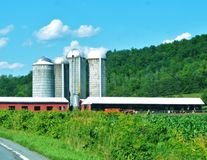 Silos and Cattle Royalty Free Stock Image