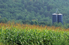 Silos and Corn Field Royalty Free Stock Image