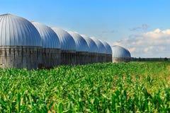 Silos de grão no campo de milho Fotografia de Stock Royalty Free