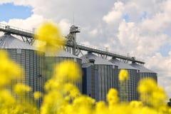 5 silos de grão nos campos Foto de Stock Royalty Free
