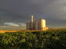 Silos de grano en una granja en la puesta del sol Fotografía de archivo libre de regalías