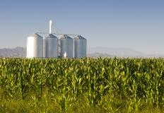 Silos del metal en un campo de maíz imagen de archivo libre de regalías