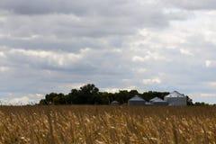 Silos di grano al bordo di un campo di cereale maturo Immagine Stock Libera da Diritti