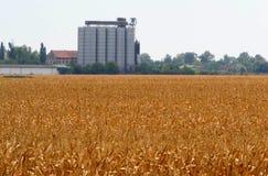 Silos di grano e del campo di grano Immagine Stock