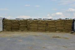 Silos di stoccaggio in un silo della fossa Farmin ed agricolo Fotografia Stock Libera da Diritti