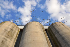 Silos and doves Royalty Free Stock Photo