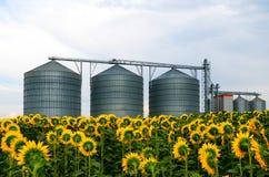 Silos in einem Sonnenblumenfeld Stockfotografie