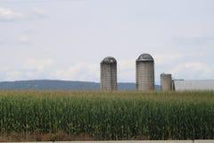 Silos en un verano de Pennsylvania del campo de maíz de 2017 4 Foto de archivo