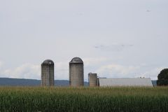Silos en un verano de Pennsylvania del campo de maíz de 2017 6 Foto de archivo libre de regalías