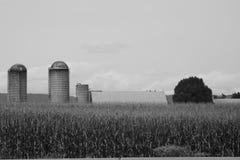 Silos en un verano de Pennsylvania del campo de maíz de 2017 8 Imagen de archivo