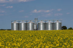 Silos no campo do Canola Fotografia de Stock