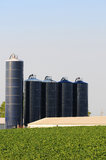 Silos on soybean farm Stock Photography