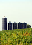 Silos in a soybean field on farm Stock Image