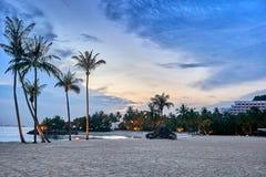 Siloso strand i Singapore på natten med palmträd som tänds av nattljuset arkivbilder
