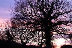 Silouette дерева суффолька стоковое изображение