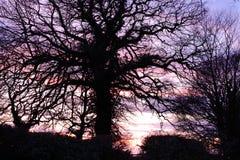 Silouette дерева суффолька стоковое фото
