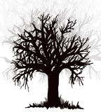 树 黑silouette 图库摄影