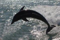Silouette av en delfin Arkivbild