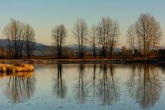 Silouette av träd i vinter royaltyfri fotografi